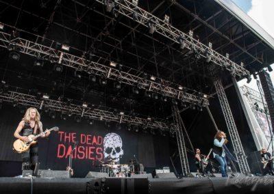 Daisies-0436[1]